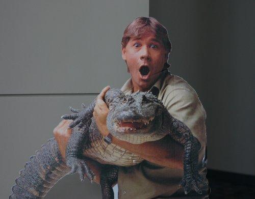 a-shocked-steve-with-croc.jpg