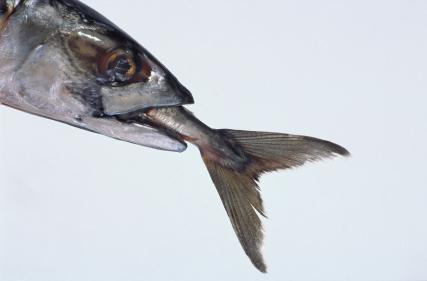 fish-retribution.jpg